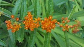 Orange flowers. Orange groups of flowers Stock Photo
