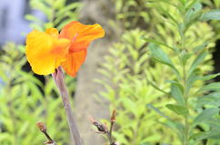 Orange flowers grow up from soft stalk. Royalty Free Stock Photo