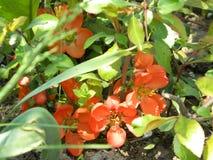 Orange flowers. Growing among green grass in the garden Stock Photos