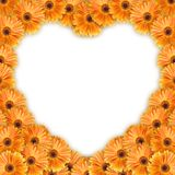 Orange flowers heart pattern. Orange flowers arranged in a heart pattern. Copy space available Stock Images