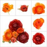 Orange flowers isolated Royalty Free Stock Images