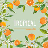 Orange, Flowers and Leaves. Exotic Graphic Tropical Banner Royalty Free Stock Photos