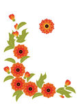 Orange flowers and leaves on a white background. Vignette from the stylized orange flowers and leaves of calendula Stock Photo