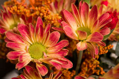 Orange flowers. A lovely two orange flowers bouquet Stock Photography