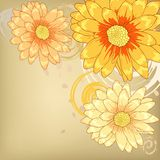 Orange flowers with  ornament Royalty Free Stock Images