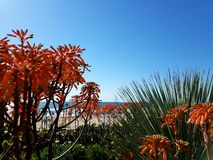 Orange flowers over the beach and ocean. Orange flowers over the sea on beach Royalty Free Stock Image