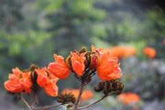 Orange flowers. Flowers park indonesia Royalty Free Stock Photos