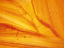 Orange Flowers Petals Texture. A macro texture shot of orange flower petals for use as a background or texture royalty free stock photos