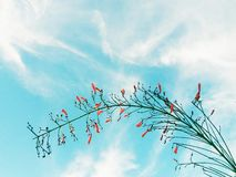 Orange flowers photographed  under the sun light with beautiful sky and clouds in the background. Plant green red leaves beautiful sky clouds background stock photography