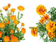 Orange flowers postcard Royalty Free Stock Images
