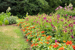 Orange flowers and purple trumpets in garden Royalty Free Stock Images