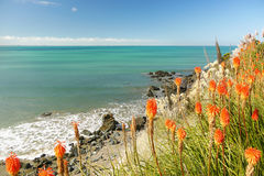 Orange flowers by the sea Stock Images