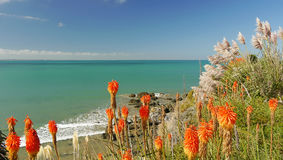 Orange flowers by the sea Royalty Free Stock Photography