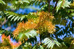 Orange flowers on the tree in nature Royalty Free Stock Photo