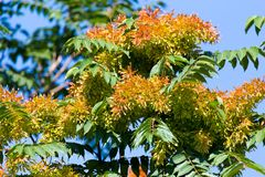 Orange flowers on the tree in nature.  Stock Photography