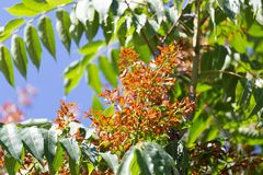 Orange flowers on a tree. In the park in nature Stock Photography
