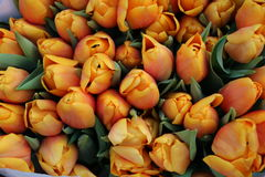 Orange flowers. Orange tulips on the flower market, Amsterdam, Netherlands Stock Photos