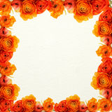 Orange flowers and white texture background Stock Photography