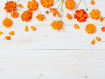 Orange flowers on white wooden background Royalty Free Stock Images