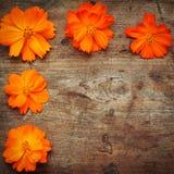 Orange flowers on wood. En background Stock Photo