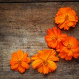Orange flowers on wood. En background Stock Photography