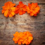 Orange flowers on wood. En background Royalty Free Stock Photos