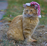 Orange fluffy cat with christmas hat Royalty Free Stock Photography