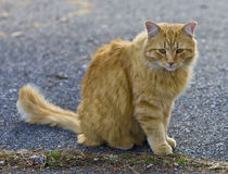 Orange fluffy cat looking away outside in yard Stock Photos