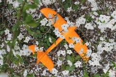Orange flygplan för leksak på jordningen under de smula vita blommorna av Apple arkivfoton