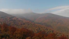 Orange foliage. Autumn in the Carpathian Mountains. Autumn in the carpathian mountains. Beautiful clouds in the mountains. Beautiful orange hills and coniferous stock footage