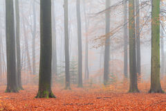 Orange footpath forest Stock Image