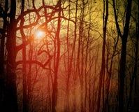 Orange forest Stock Photo