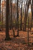 Orange forest stock image