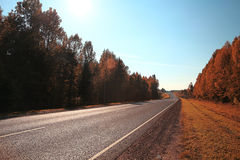 Orange forest along road Stock Photography