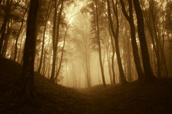 Orange forest with fog in autumn Stock Photography