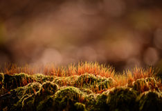 Orange forest moss Stock Image