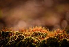 Orange forest moss Stock Image