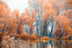 Orange forest beside the river shore stock photography