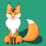 Orange fox sitting isolated on neutral background Royalty Free Stock Photography
