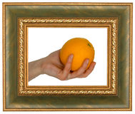 Orange in frame Royalty Free Stock Image