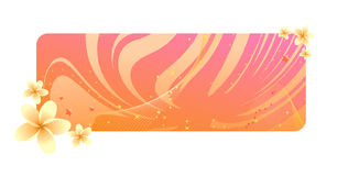 Orange frangipani banner Stock Photos