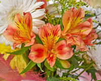 Orange freesia flowers bunch Stock Images