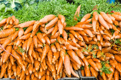 Orange fresh dug carrots at the market Stock Photos
