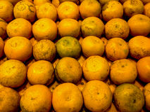 Orange - Fresh Fruit Vegetabels After Harvest. Fresh Fruits and Vegetables Collection After Harvest in Display Royalty Free Stock Images