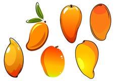 Orange fresh tropical mango fruits Royalty Free Stock Images