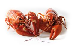 Orange Freshwater Lobsters Royalty Free Stock Photo