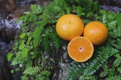 Orange frische Frucht auf einem Stein mit Farnblatt Lizenzfreies Stockfoto