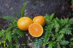Orange frische Frucht auf einem Stein mit Farnblatt Stockfotografie