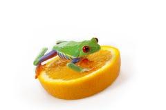 Orange frog Royalty Free Stock Images