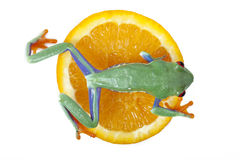 Orange frog Royalty Free Stock Image